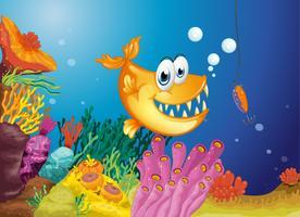 Ein Orangenfisch und ein kleiner Fisch in einem Köder gefangen