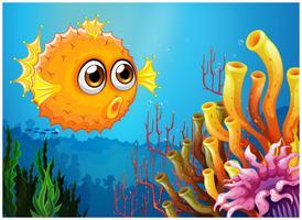 En pufferfisk nära korallreven
