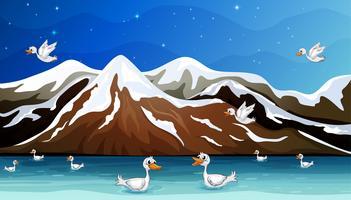 Enten und Wasser vektor