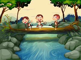 Tre apor som passerar floden vektor