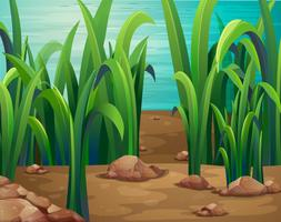 Gröna växter längs floden vektor