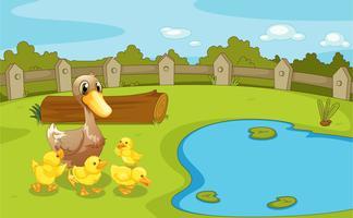 Enten nahe dem kleinen Teich