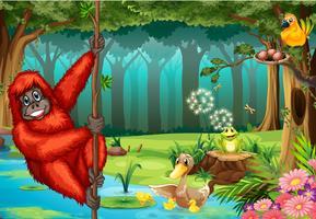 Orangutan i djungeln vektor