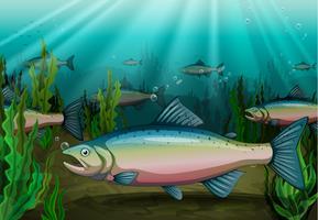 fisk vektor