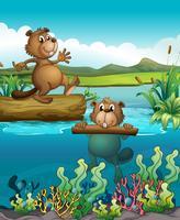 Två beavers vid den djupa floden vektor