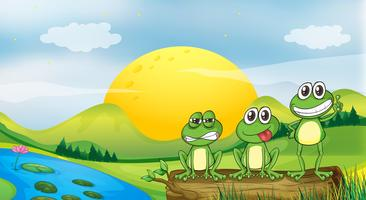 Tre grodor vid flodbredden vektor