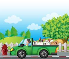 Ein grünes Auto entlang der Straße mit Hunden auf der Rückseite vektor