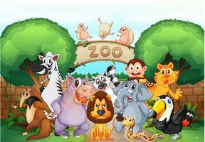 Zoo und Tiere