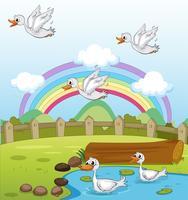 Enten und ein Regenbogen