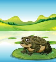 Frosch und Teich vektor