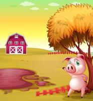 Ein Schwein, das den Stall auf die Schweinefarm zeigt