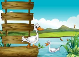 Ein leeres Schild mit Enten