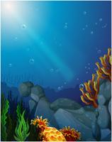 Korallen und Algen unter dem Meer vektor