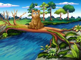En björn som sitter i mitten av träbroen