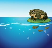 Frosch und Kaulquappen vektor