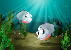 Två fiskar med vassa tänder under havet vektor