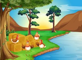 Hühner in der Nähe des Flusses