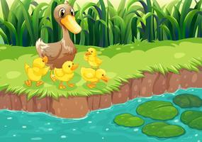 Eine Mutter Ente mit ihren Entlein am Fluss