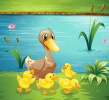 Eine Mutter Ente mit ihren Entlein im Fluss