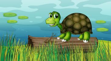 En sköldpadda över ett trä vid flodbredden