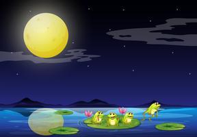 Frösche bei den Seerosen im Fluss