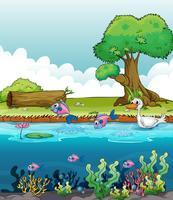 Meeresbewohner mit Ente