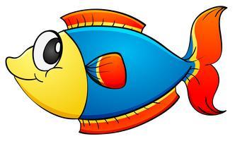 Isolerad tropisk fisk på vitt