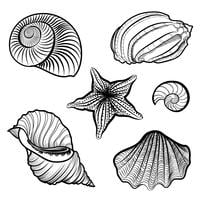 Verschiedene Muscheln, Seesterne. Eingemeißeltes Meeresmuschel-Leben