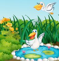 Ein Teich mit Enten