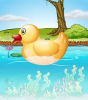 Die gelbe Spielzeugente im Teich