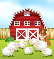 Schafe und Scheune