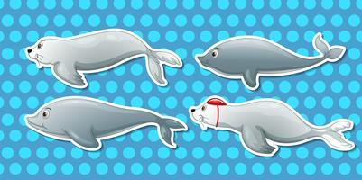Otter och delfin vektor
