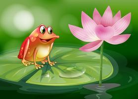 En groda ovanför vattenljuset bredvid en rosa blomma