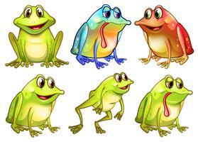 Sex olika grodor vektor