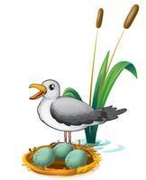 Ein Vogel neben dem Nest mit Eiern