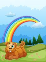 Ein Bär auf dem Hügel mit einem Regenbogen am Himmel