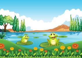 Zwei verspielte Frösche am Teich