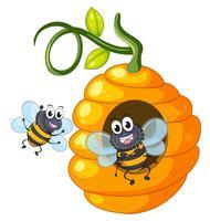 Två bin som flyger kring bikupan