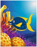 En stor leende fisk nära korallrevet
