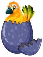 Gelber Keilschwanzsittichvogel, der Ei ausbrütet vektor