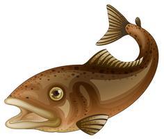Getrennte tropische Fische auf Weiß vektor