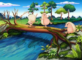Hedgehogs leker vid floden vektor