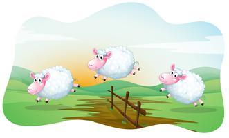 Schafe vektor