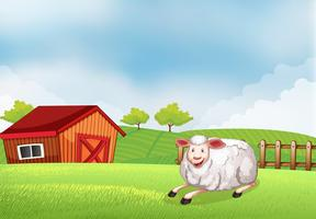Ett får som ligger på gården med en ladugård