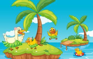 Ente und Entenküken auf der Insel