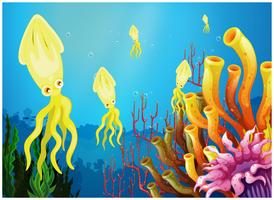 Gelbe Tintenfische in der Nähe der Korallenriffe