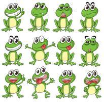 Verschiedene Gesichter eines Frosches