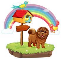 Hund und Regenbogen vektor