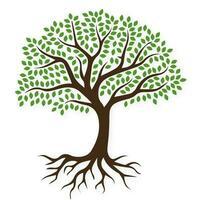 Träd med rötter vektor