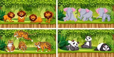 Set av ett djur i djungeln vektor